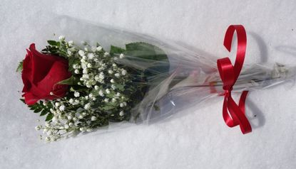 Picture of 1 Single Roses