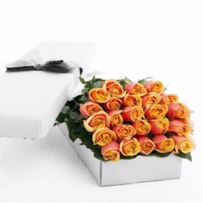 Picture of 24 Peach Roses